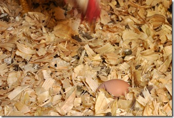 it&#39;s an egg! 080210  (20)crop