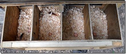 eggs 081410 (3)