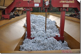 cotton harvest 2010 (8)