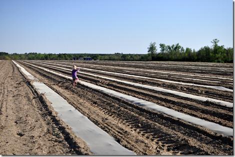 transplanting watermelons 0311 (24)