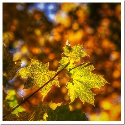 Осень1