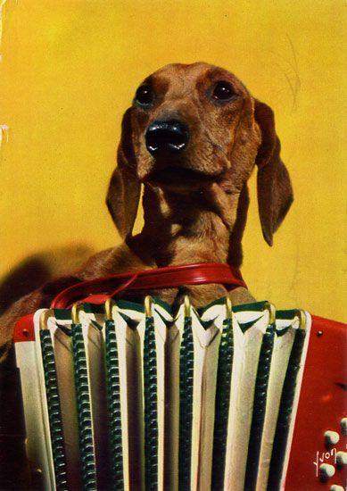 Cartes Postales Pop et  Kitsch des années 50, 70 et 70 Dachshund : Musician or porn star ? - Teckels cruels