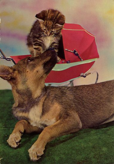 Cartes Postales Pop et  Kitsch des années 50, 70 et 70 - Pop and kitsch vintage postcards from the fifties, the sixties and the seventies : Chiens et chats fort occupés
