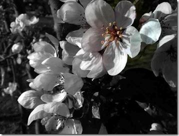 spring2010 (4)