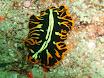 nudibranche.jpg