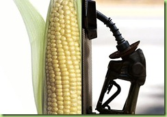 corn-worse-than-oil-california