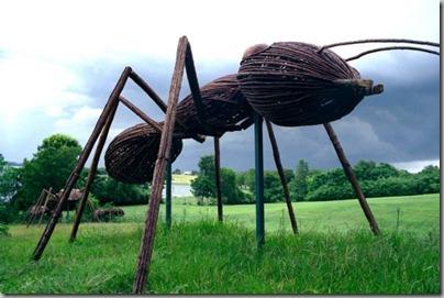 big-bugs-ants