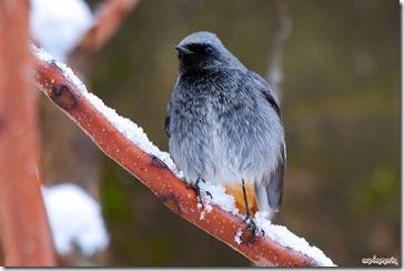 Con el plumaje hueco para protegerse del frio