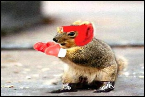 boxing_squirrel