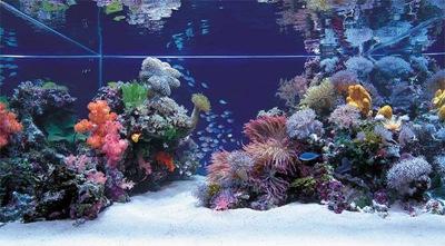 O aquário da terrível sala do Bloco J!