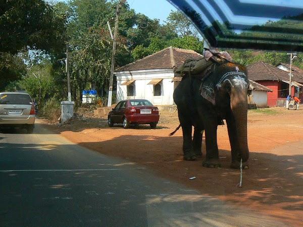Obiective turistice India Goa: ne intersectam cu elefantul Anjuna