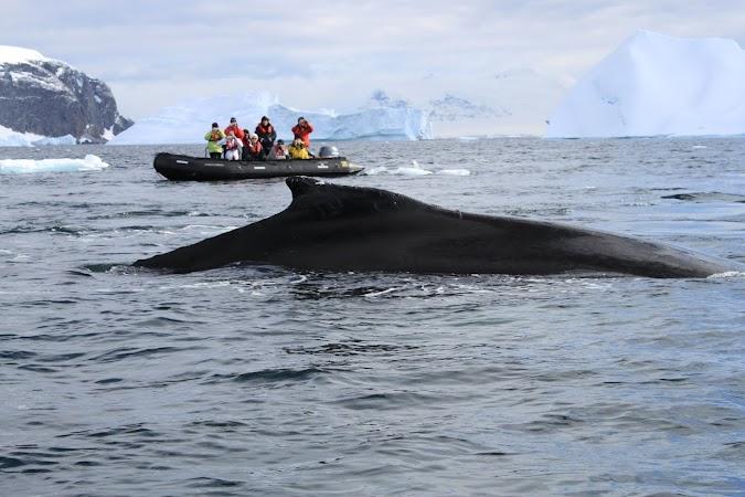 19. balena.JPG