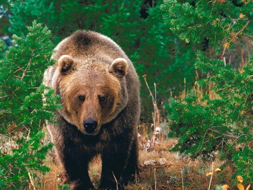 list of major species bears_www.wonders-world.com_1202