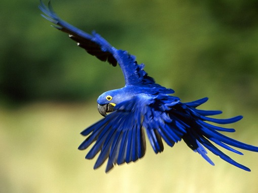 Top 10 List of Exotic Pets_www.wonders-world.com_06