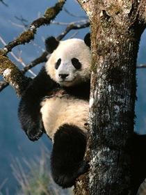 most-endangered-species on-earth_www.wonders-world.com_13