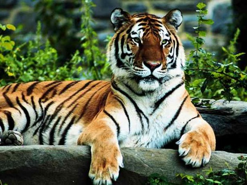 most-endangered-species on-earth_www.wonders-world.com_21