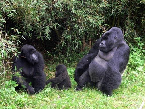 most-endangered-species on-earth_www.wonders-world.com_14