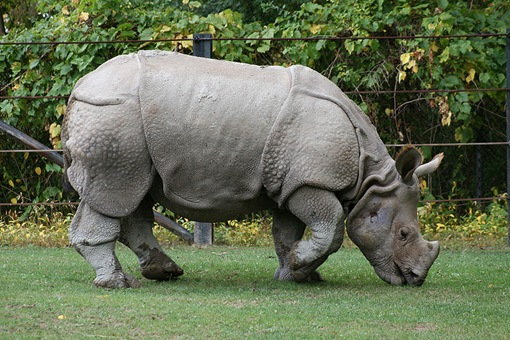 Top 10 Most Endangered Species on Earth - Wonders-World.com