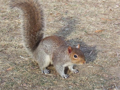 Do Squirrels Eat Dog Food