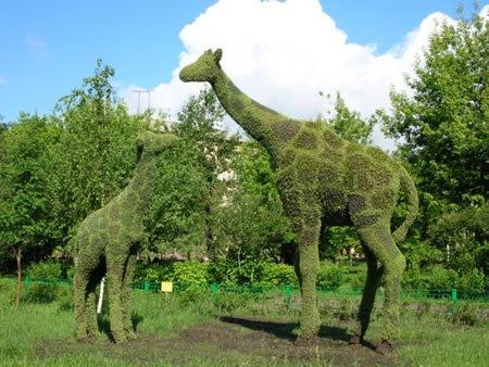 a96735_giraffe-grass
