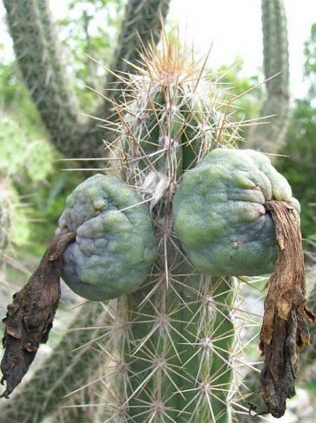 Most Suggestive Cacti On Earth 279