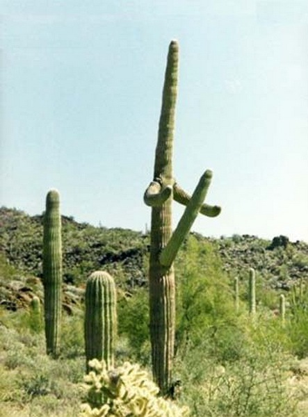 Most Suggestive Cacti On Earth 292