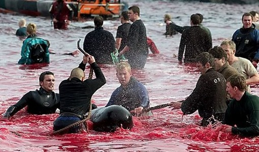 pembunuhan massal hewan laut