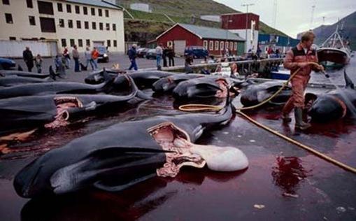 ikan lumba-lumba mati banyak