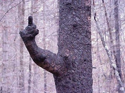 The Finger Tree