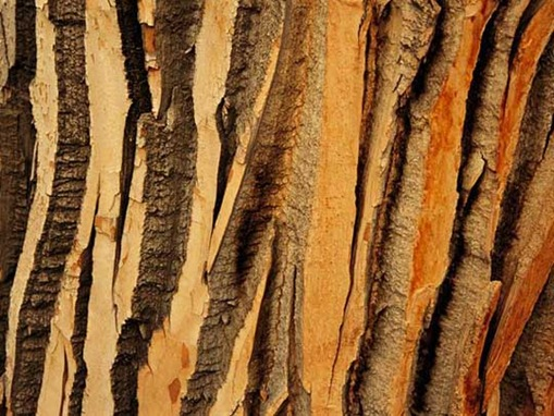 Beautiful Natural Pattern of Tree  Seen On www.coolpicturegallery.us