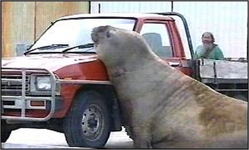animals-attacking-cars-07