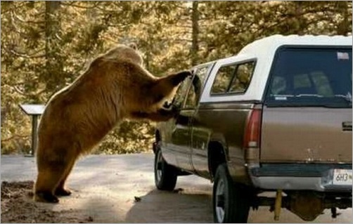 animals-attacking-cars-09
