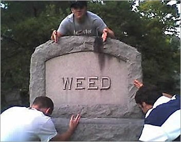 weed_tombstone_20091112_1686625456
