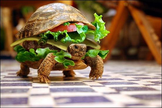 turtle-burger