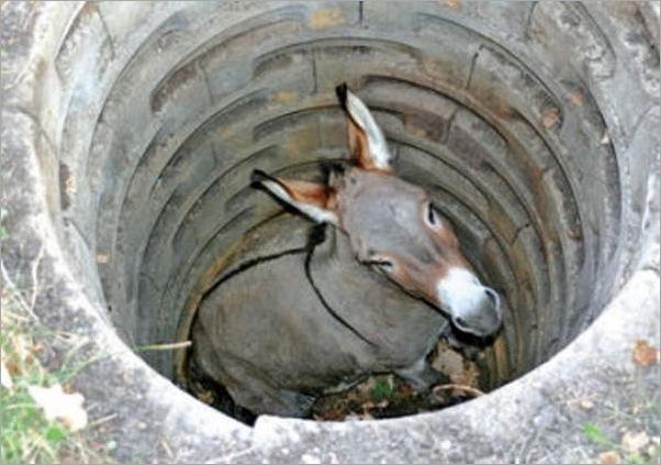 funny moment donkey life 16