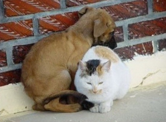 cats_and_dogs_3