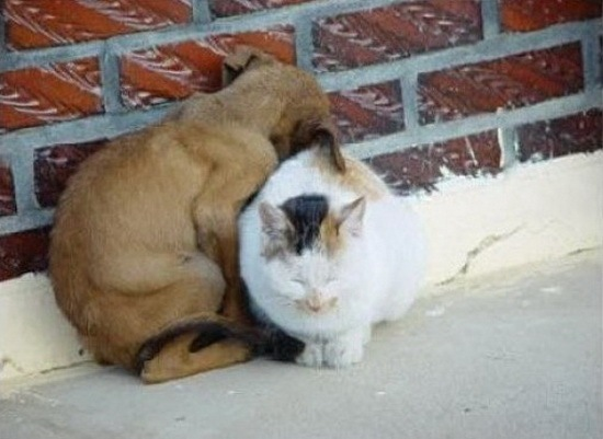 cats_and_dogs_4