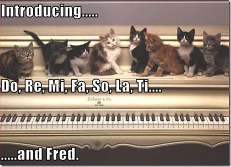 Funny Pictures: Musical kitties