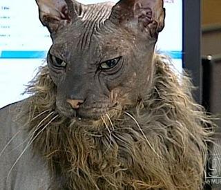 gato-feo-mundo
