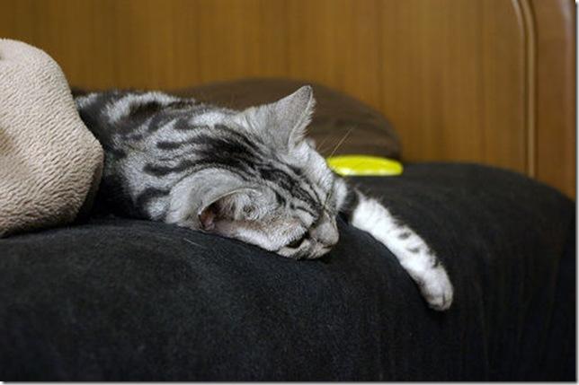 Lazy Chibi