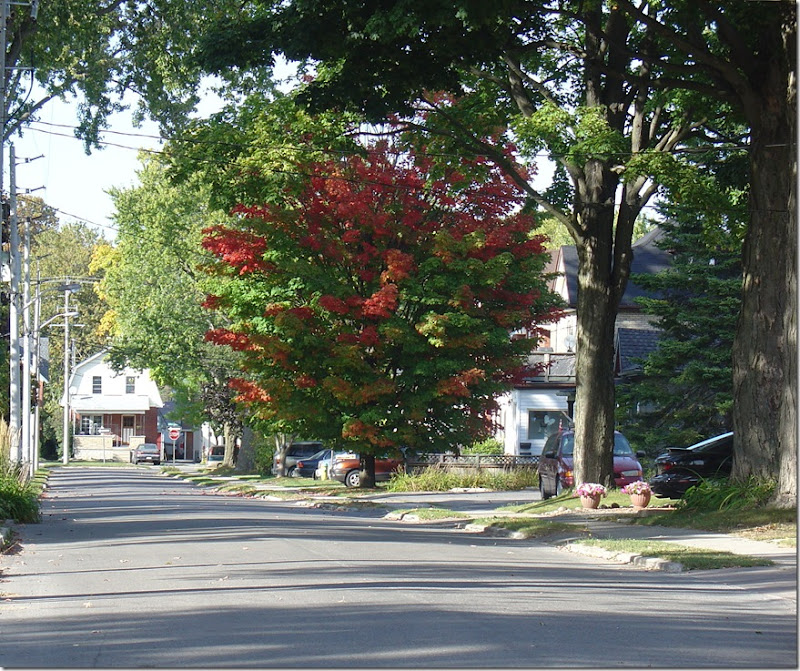 Fall Colours in Stratford