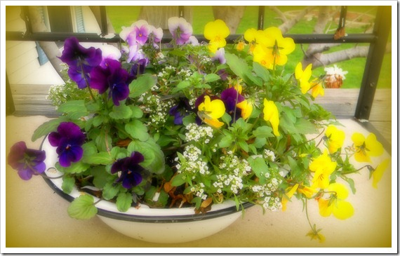 porch flowers 012a