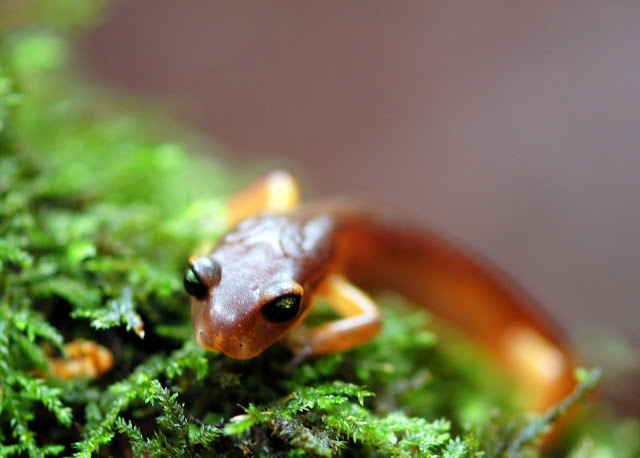 Salamander in Greenery by Antony Wilson