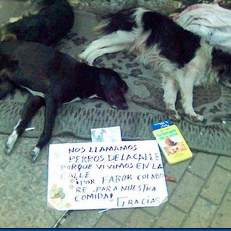 Día del Perro Callejero (en Chile)