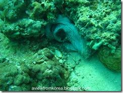 Dive Site 2_02 [1280x768]