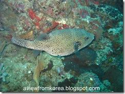 Dive Site 3_11 [1280x768]