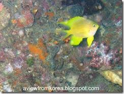Dive Site 3_13 [1280x768]