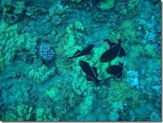 Maui Snorkeling_27 (Medium)