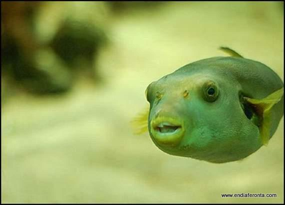 fish-faces02.jpg