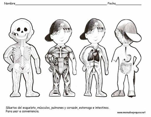 Dibujos para colorear de los musculos del cuerpo humano para niños ...